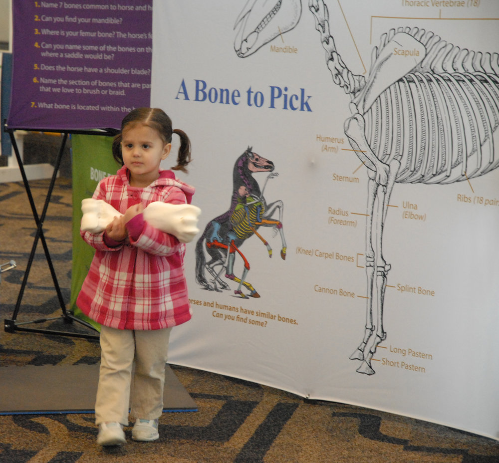 The traveling display presented by The United States Pony Clubs offers numerous educational stations made of authentic equine components such as bones from a real horse and actual grooming and tack items. Photo courtesy The United States Pony Clubs.