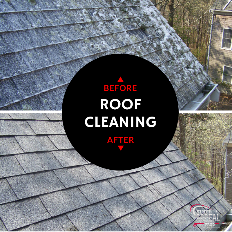 harwich-roof-cleaning-moss-mold-lichen.png