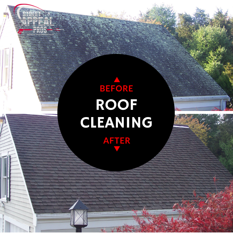 CAPE COD ROOF CLEANING MOSS MOLD ALGAE.png