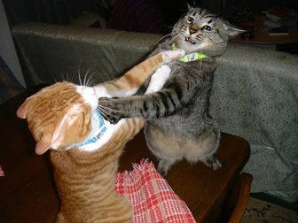 cats_fighting_102006_5.jpeg