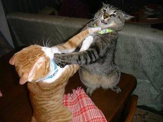 cats_fighting_102006_5.jpeg