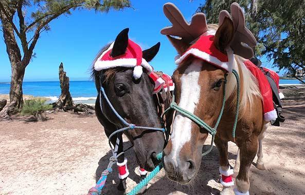 horses-holiday-beach.jpg