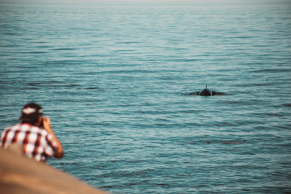Observation de baleines - De votre chalet ou de la plage, il est possible d'y observé des mammifères marins comme la baleine, le phoque, le loup de mer, etc. Pour avoir d'avantage de chance d'en observer, il est possible de partir en excursion à partir de la ville de Matane.