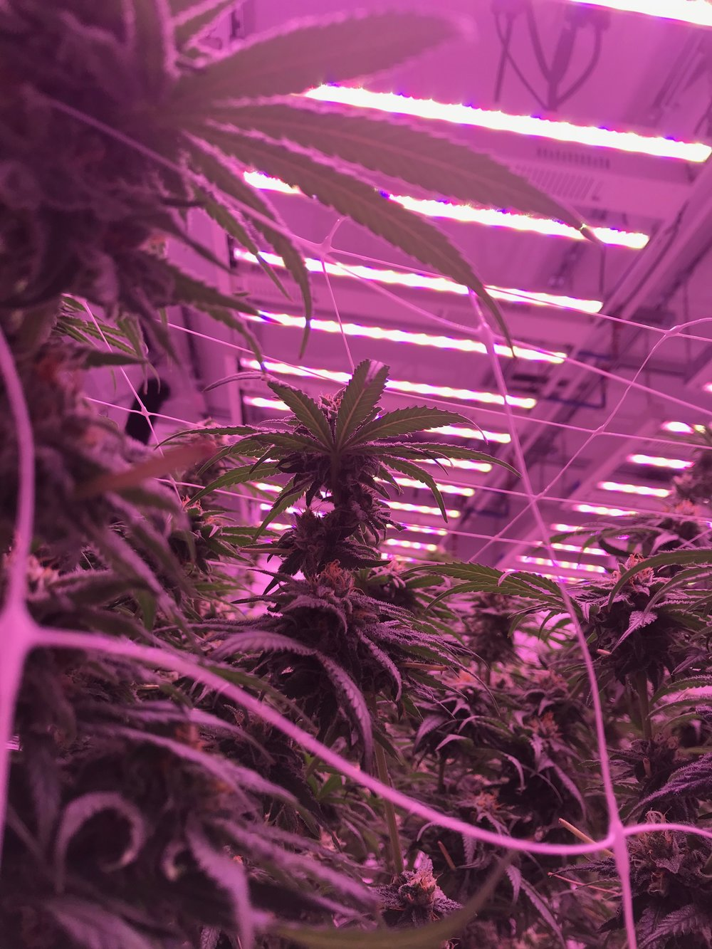 Work With Us - Make your dream of operating your own dispensary become a reality. For a free tour of our state-of-the art cultivation facility and information on how to work with Revolutionary Clinics, contact us.With your passion, and our real estate, capital, and product, we know that it won't just be cannabis we'll be growing.
