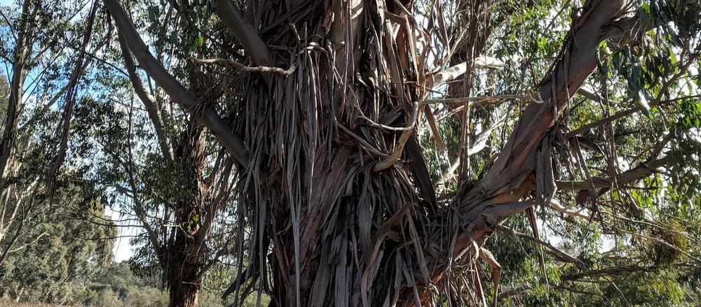 tree planting tally