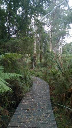 Fern Gully, Red Hill Victoria