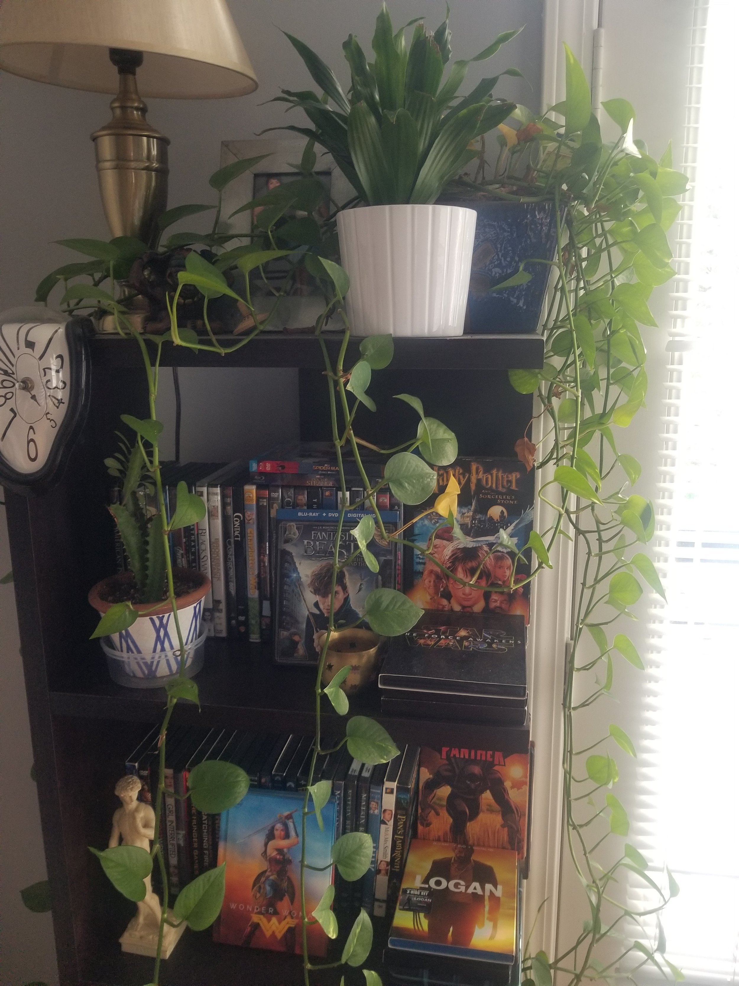 Plant on bookself