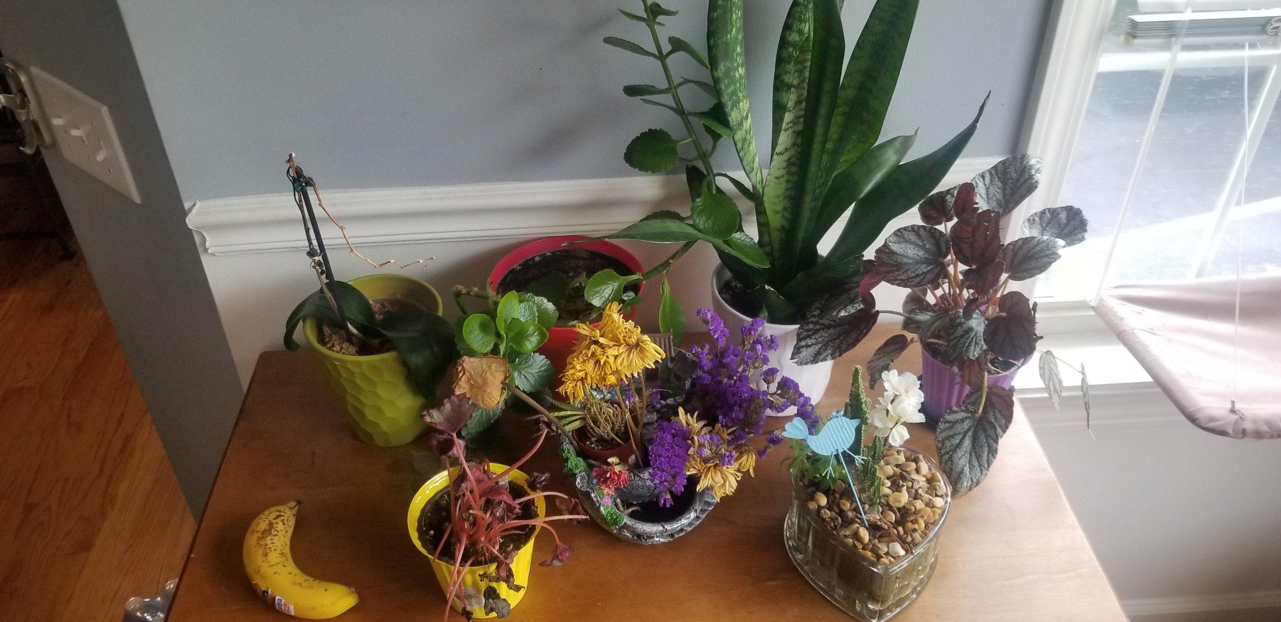 Plants arranged and banana yum