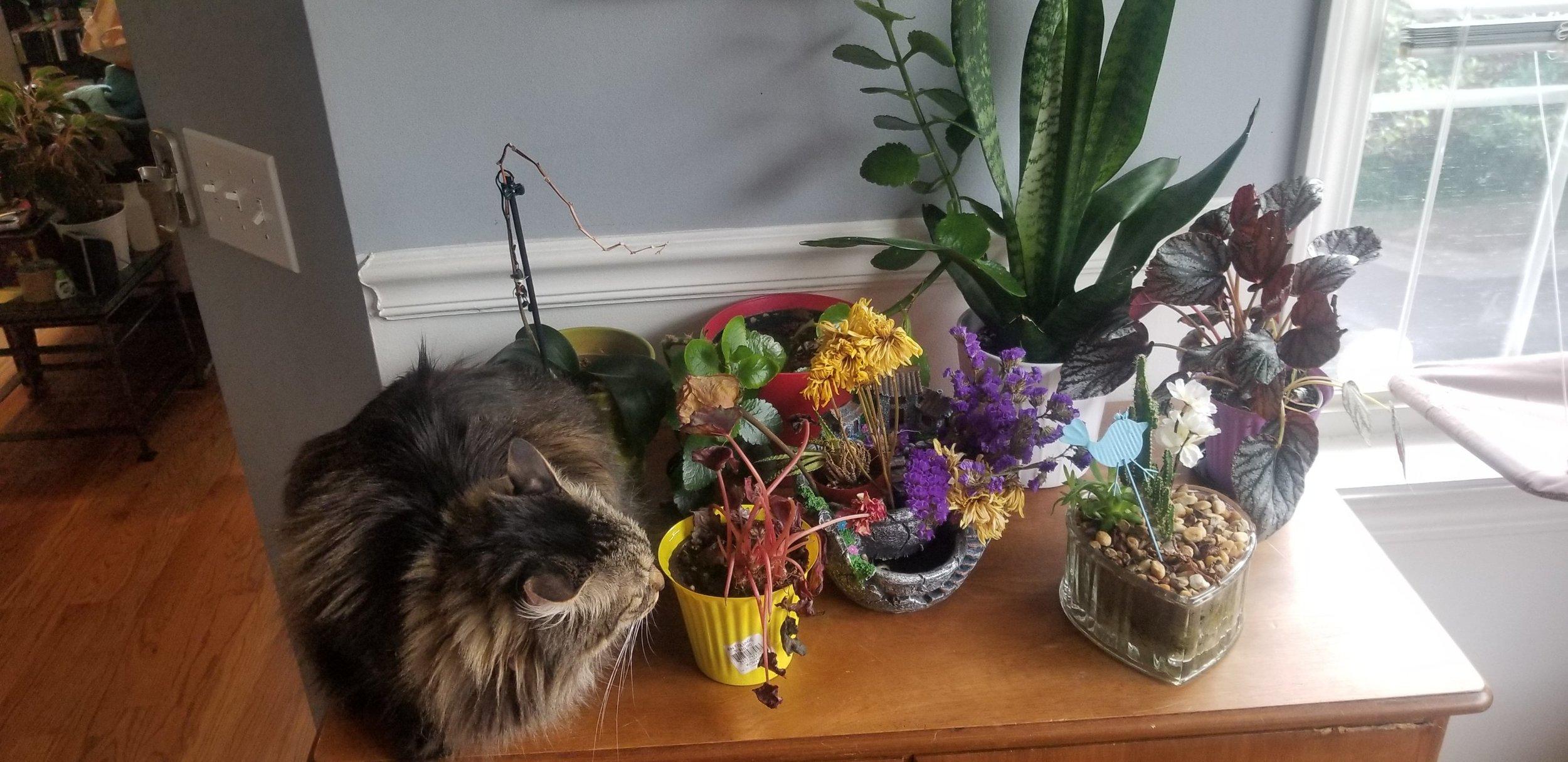 Cat by arrangement of plants