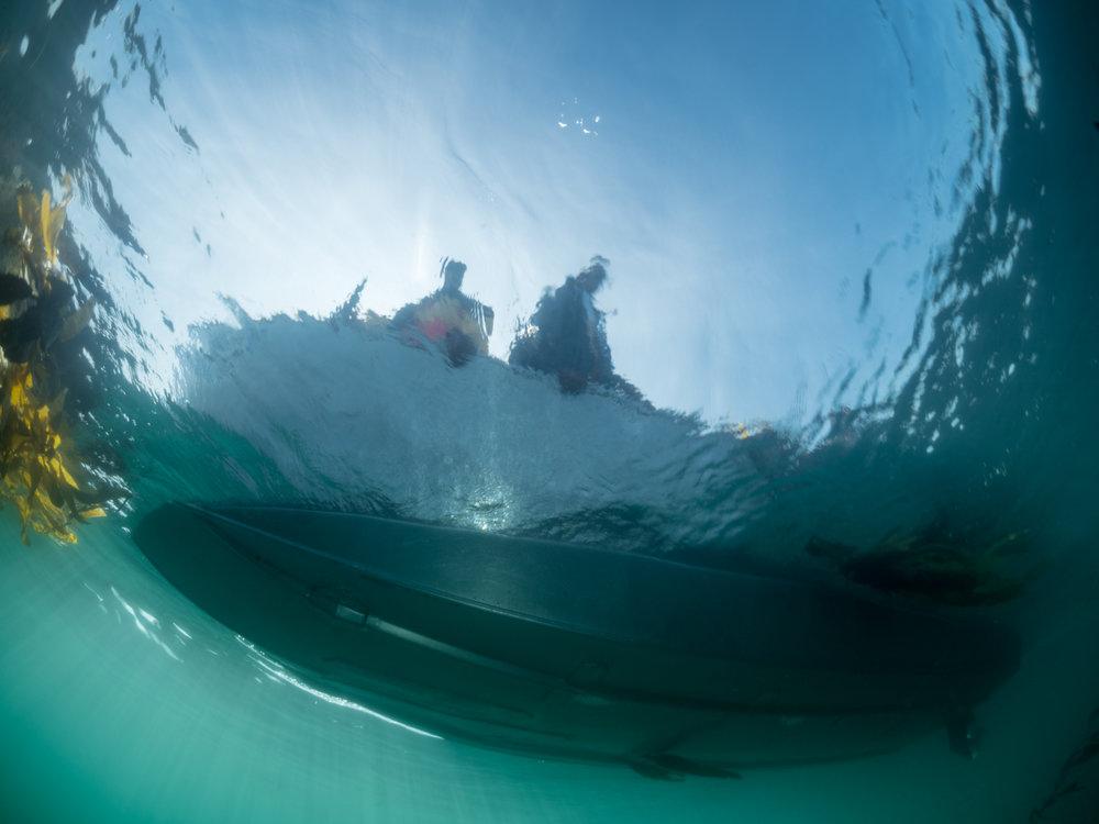 Kelp Harvest-9.jpg