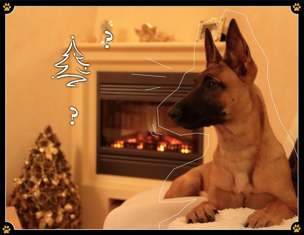 """7. Dezember - Weihnachten ist für meinen Hund... Seit ein paar Wochen duftet das Haus ganz wundervoll. Aber noch besser sind die Kekskrümel die ab und zu herunterfallen! 😋Außerdem essen meine Menschen plötzlich Essen, das noch viiiel besser riecht als sonst – ich werde sie einfach so lange traurig anschauen, bis sie mir ein Stück davon abgeben. Meinem Blick widersteht keiner. 😎Letzte Woche kam mein Papa mit einem Baum nach Hause, der sich perfekt zum Markieren eignen würde! Aber irgendwie haben meine Menschen etwas dagegen, wenn ich mein Geschäft hier erledige – dabei ist der Garten doch jetzt im Haus ⁉️Und nicht, dass das schon schwer genug für mich auszuhalten wäre, hängen sie jetzt auch noch glitzernde Bälle in den Baum, mit denen ich nicht spielen darf, weil sie angeblich """"gefährlich"""" sind. Ich wette, das ist nur eine Ausrede.Am Wochenende kommen ständig fremde, laute Leute zu uns nachhause, die mich alle anfassen und kuscheln wollen – am Anfang war das ja ganz nett, aber jetzt ist es total stressig. 😣Ach ja, da sind ja noch diese komischen Pakete. Keine Ahnung, warum Menschen sich die Mühe machen heimlich Gegenstände in Papier einzuwickeln und sie danach auch noch zu verstecken! Vielleicht mögen sie einfach das Aufreißen der Verpackung – aber das ist ja eigentlich mein Part. 🤔"""