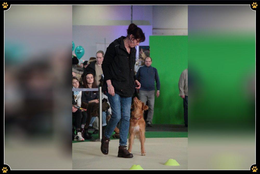 JoBaDog_Gruene_Woche_2019_Longieren_2.jpg