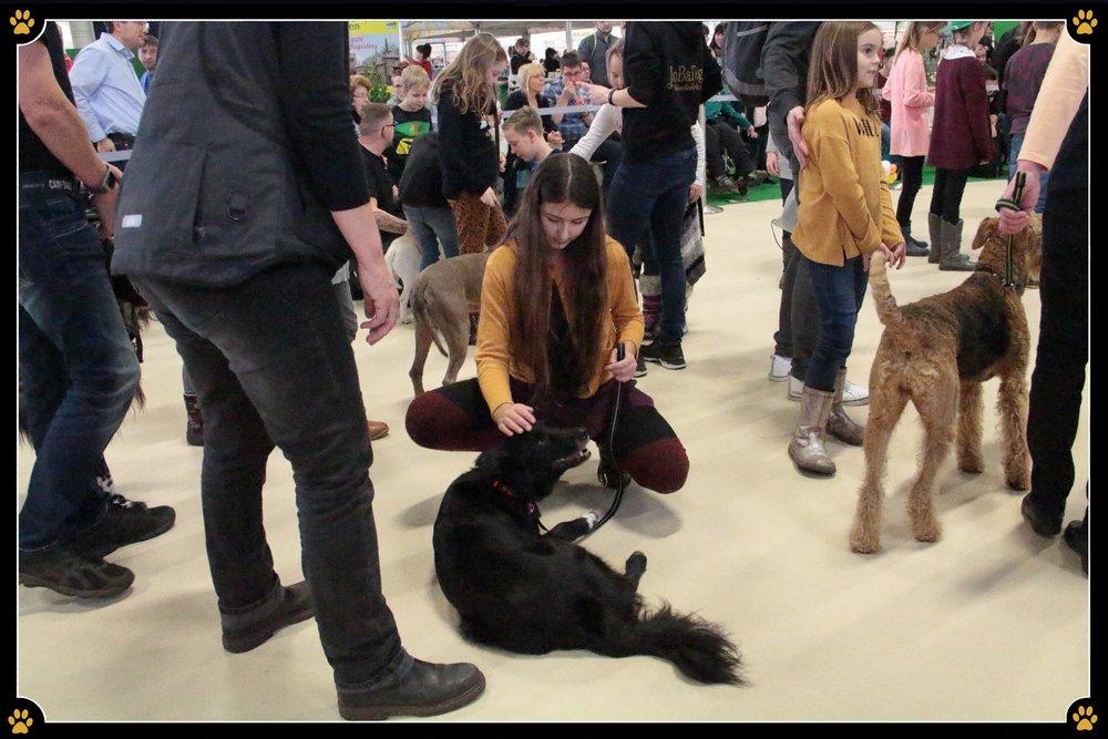 JoBaDog_Gruene_Woche_2019_Hunde_zum_Anfassen_2.jpg
