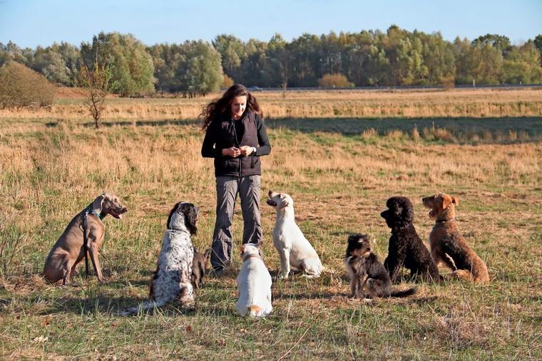 Joanna Bauers Konzept ist, nicht alle Hunderassen in der Ausbildung über einen Kamm zu scheren.Quelle: Veronique Bauer