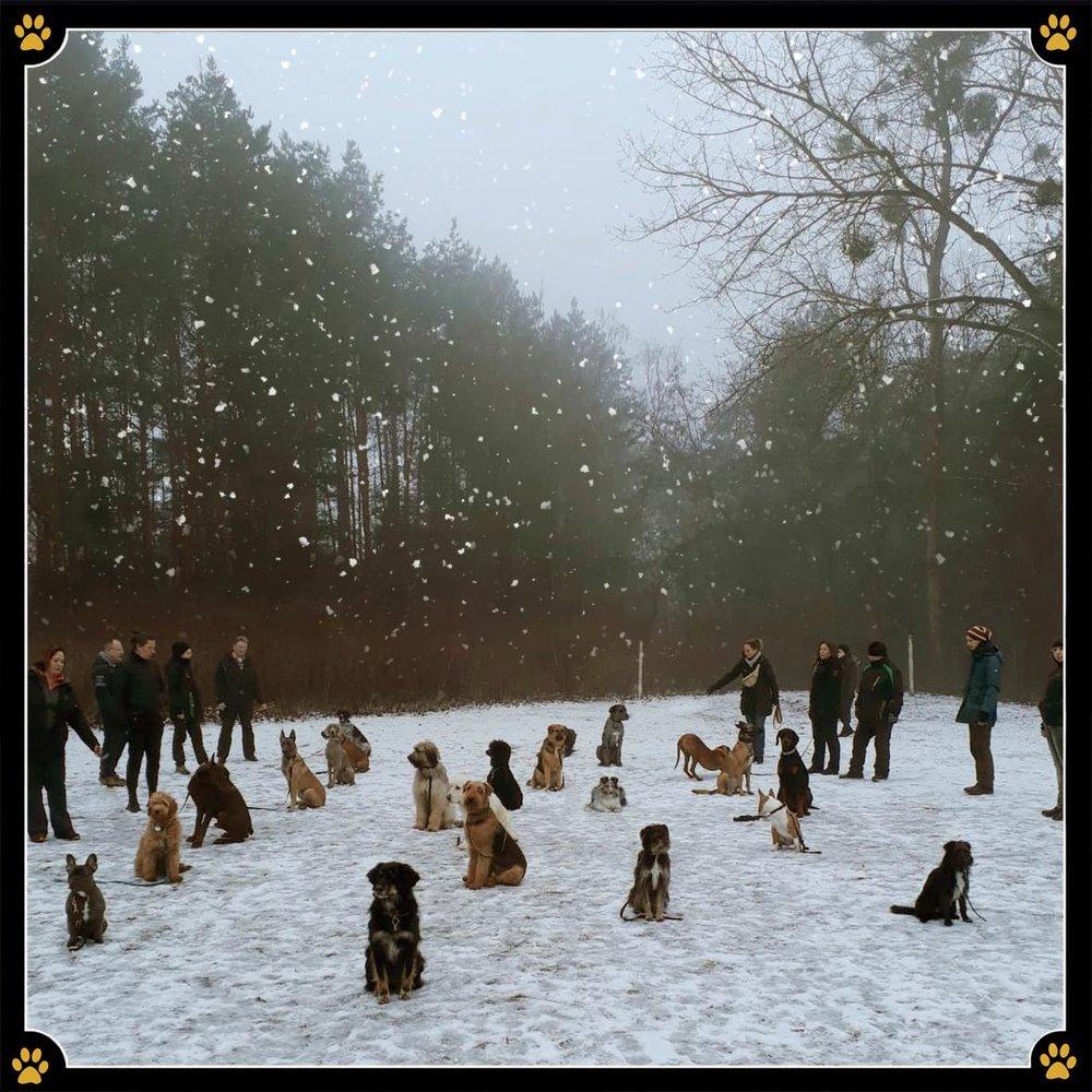 JoBaDogs Training im Winter Wonderland ❄️💛 -