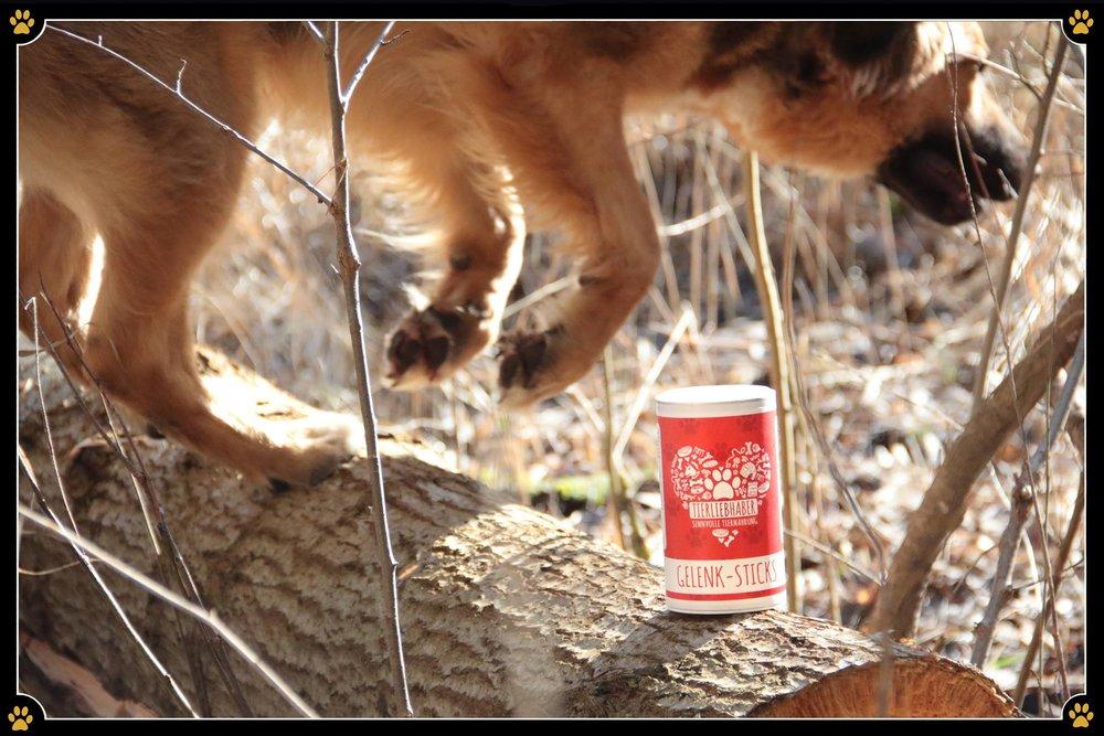 Tierliebhaber Gelenk-Sticks - Bist du aktiv mit deinem Hund unterwegs und möchtest, dass es ihm an nichts fehlt? 💛Mit den Gelenk-Sticks von Tierliebhaber kannst Du deinen Hund mit wichtigen Gelenknähr- und Pflanzenstoffen wie Grünlippmuschel, Kurkuma, Teufelskralle, MSM und Chondroitinsulfat unterstützen.💪🏻 Die Stange kann täglich als Leckerli gegeben werden und eurem Spaß an der Bewegung steht nichts mehr im Wege. Probiert es aus – die Gelenk-Sticks bekommt Ihr ab sofort auch im JoBaDog Ausbildungszentrum. 🥰🐕