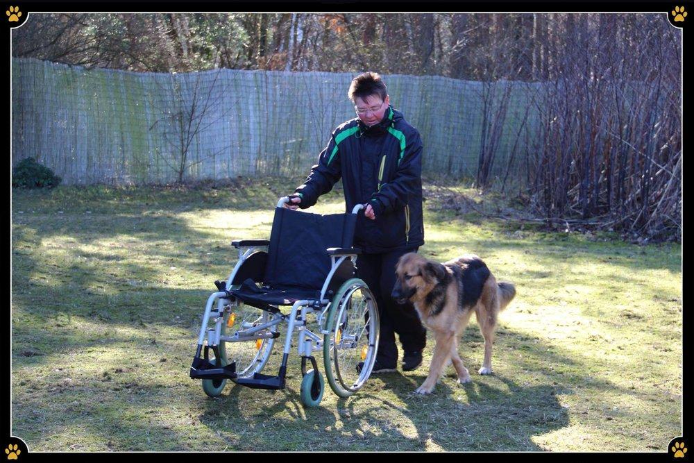 JoBaDog_Rollstuhl_Training_2.jpg