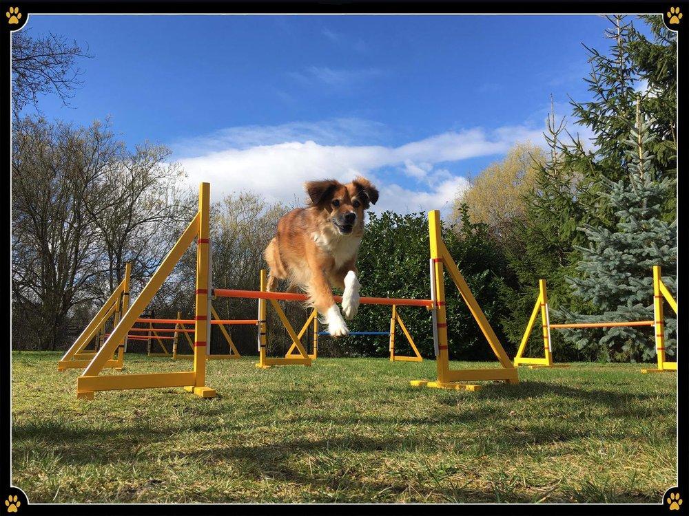 Motiviert ins Wochenende! 💪🏻🎉 - JoBaDog wünscht allen Vierbeinern und Hundehaltern einen wundervollen Ausklang dieser Woche - mit ganz viel Sonne und langen Spaziergängen natürlich. ☀️😜