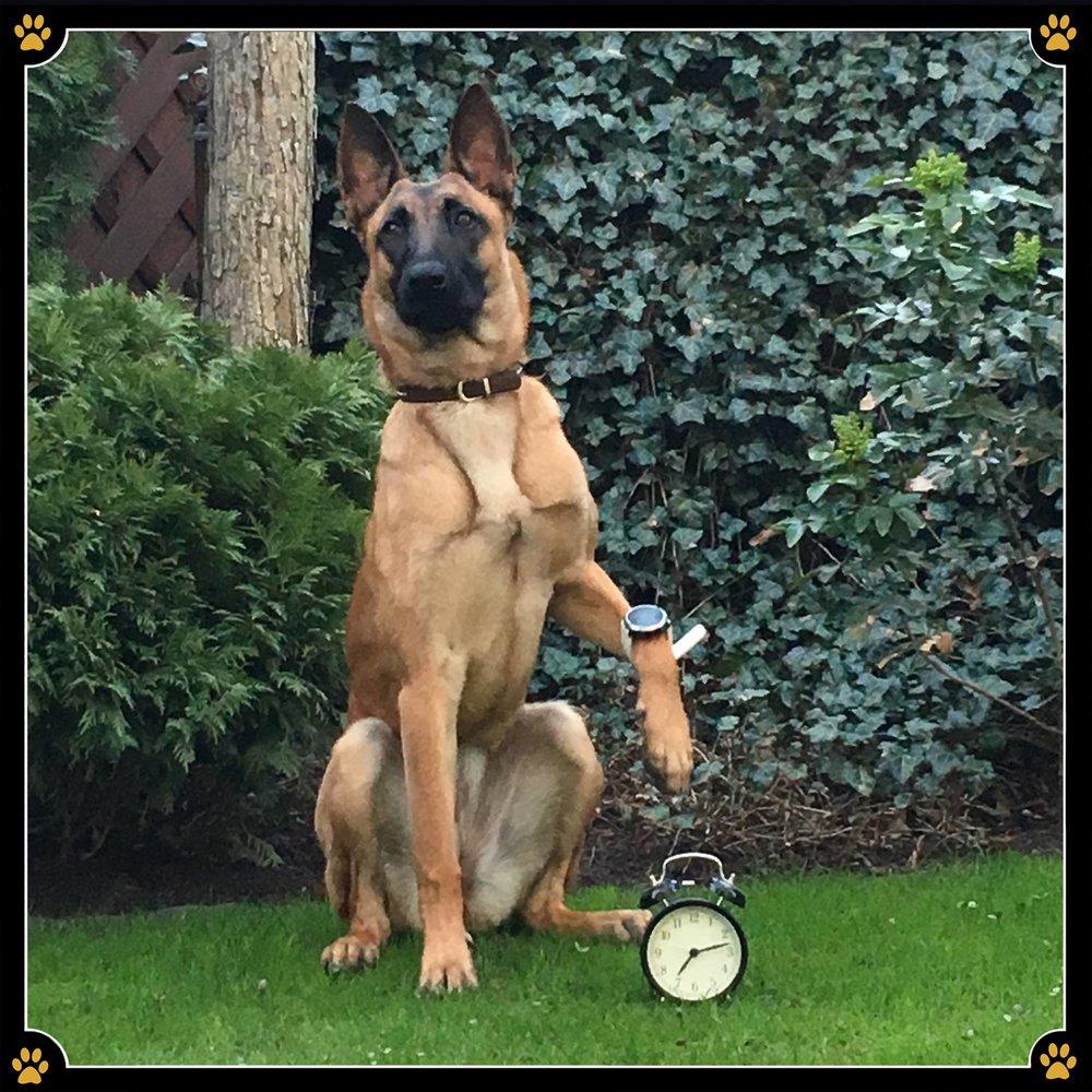 Wer hat an der Uhr gedreht❓ - Ist es jetzt zu früh oder zu spät? 🤔Egal wie, wir sehen uns heute um 10 Uhr Sommerzeit zum Training.😜