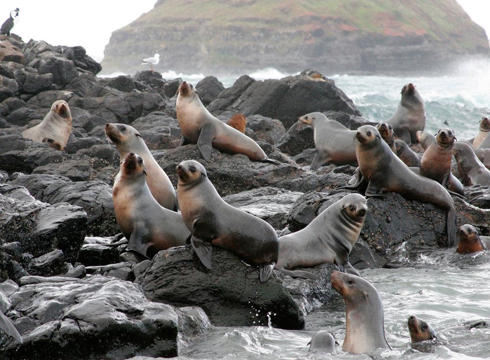 seal_rocks1_lg.jpg