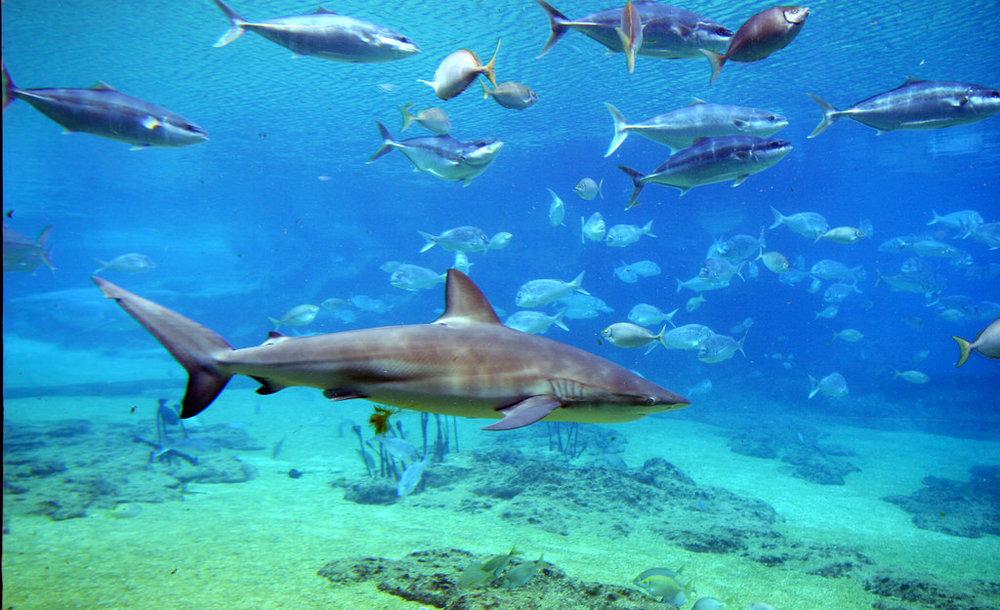 Denham/Shark Bay