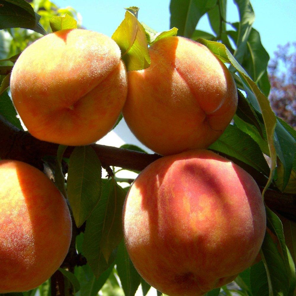 peach-863349_1920.jpg