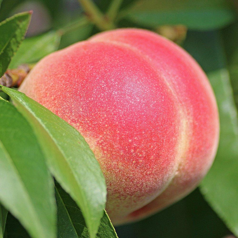 peach-2721852_1920.jpg
