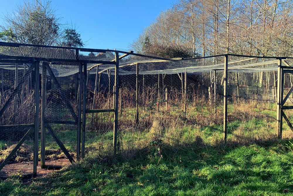 ramshackle-fruite-cage.jpg