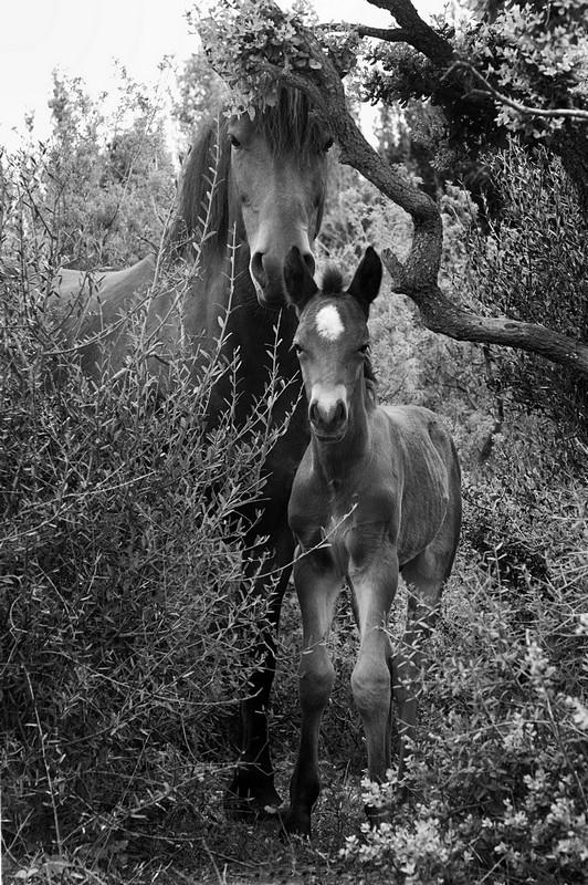 mare-foal-barraquand.jpg