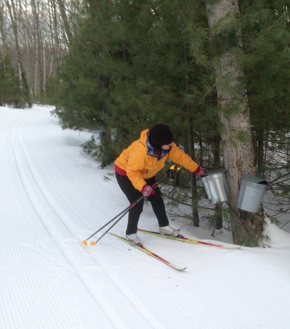 3/12/19 Checking out the Bean's sap buckets. Its running folks!! Plus the ski conditions are Wicked Sweet just like the Maple Syrup!!!
