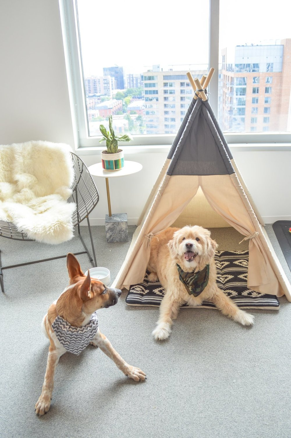 dog-hutch-for-employees-dogs.jpg