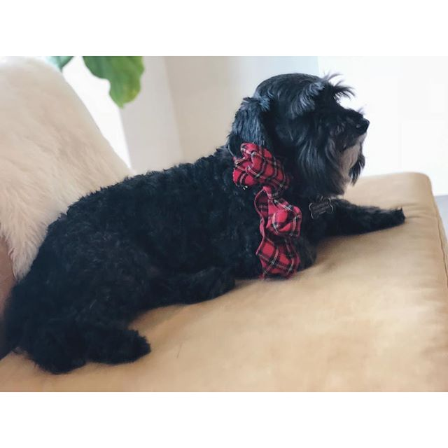 Someone's getting into the holiday spirit a little early. . . . . . . . #storyblocks #hq #work #happy #tech #dog #dogs #weheartdata #communicatefearlessly #dishwasher #communitywins #noego #friday #storygrams #blockhead #shortweek #ribbon #scarf #fun #holidays #costumes #work #pokemon #winter #dogsofinsta #friyay