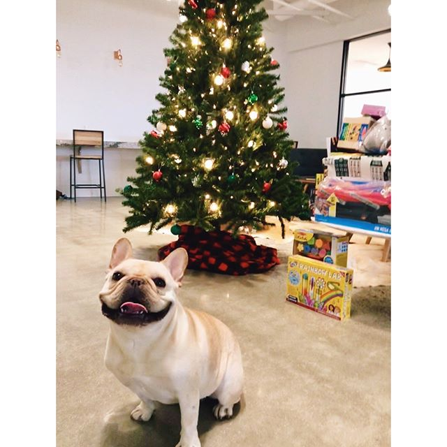 Our little elf is helping with the toy drive. . . . . . . . #storyblocks #hq #work #happy #tech #dog #dogs #weheartdata #communicatefearlessly #dishwasher #communitywins #noego #friday #storygrams #blockhead #holiday #dogsofinsta #christmas #fun #holidays #lighys #work #tree #winter #toys #toydrive #donate #monday