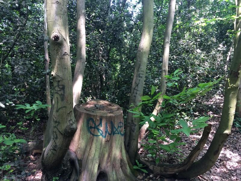 Where the trees have yo names.