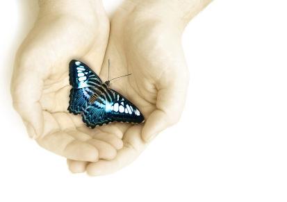 butterfly-in-hand.jpg