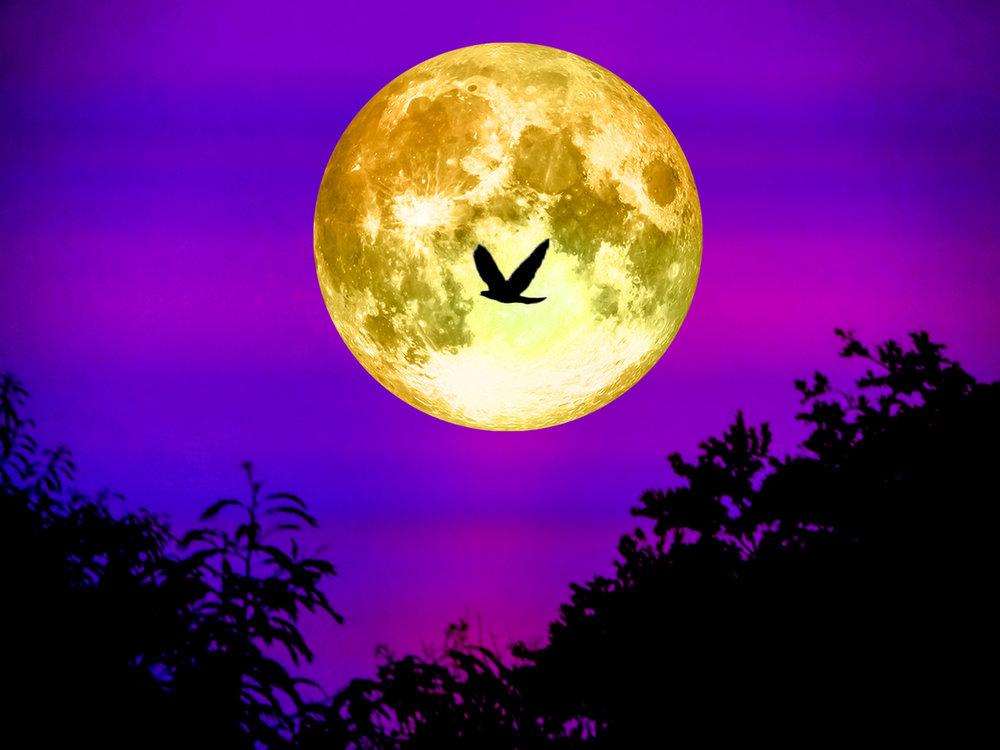 full-moon-oct-852463938.jpg