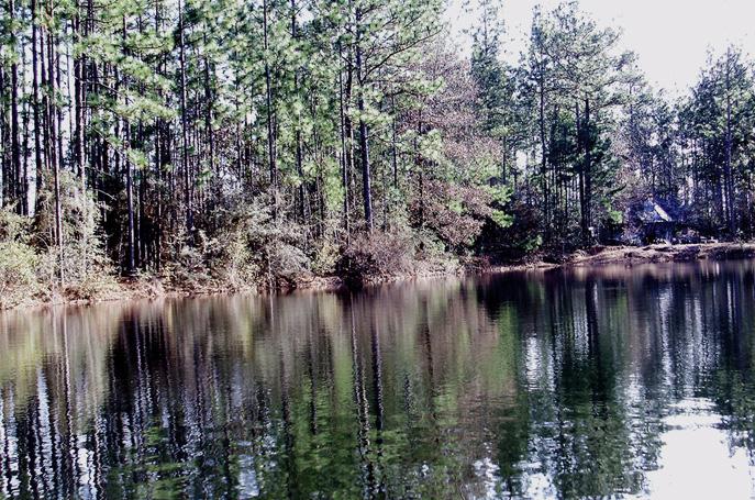 Pond_Med.jpg