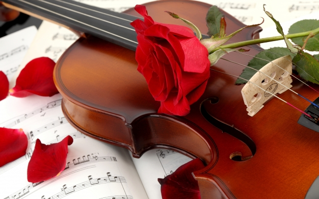 violin-red-rose_tn2.jpg