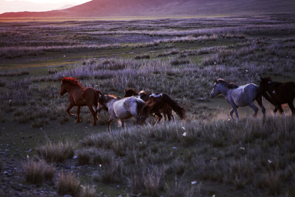 A MONGOLIAN CASHMERE PHOTO STORY: MAIYET - Written by Noble MediaImages courtesy of Kerry Dean