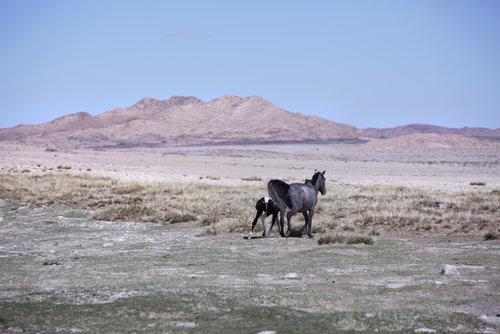 MAIYET-MONGOLIA-KD-DAY6-1-3894v1.jpg