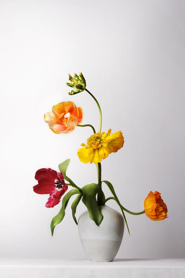 Papaver en tulpen