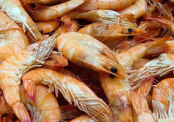 shrimps.png