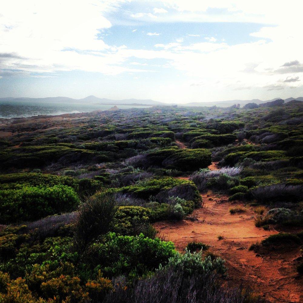 Flinders island, Tasmania (2013)  August 2013, I undertook a residency at  the Mountain Seas Arts Retreat,  on Flinders Island, Tasmania.    Follow  #fragmentsofflinders  on instagram to follow the residency.