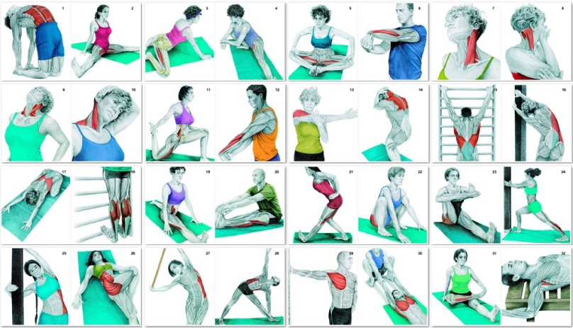 34-Pictures-To-See-Which-Muscle-You're-Stretching.jpg