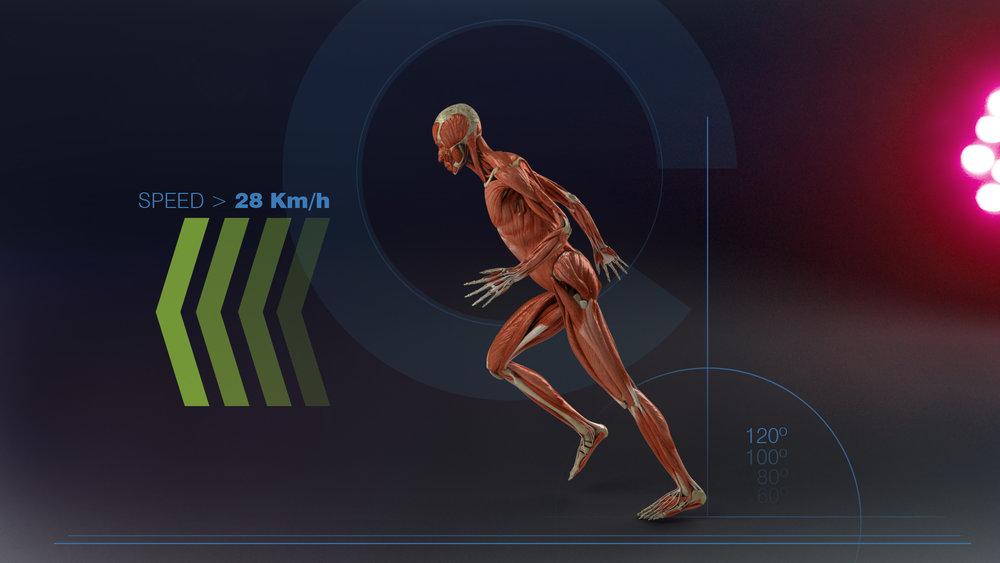 Muestra Musculos OSCURO.jpg