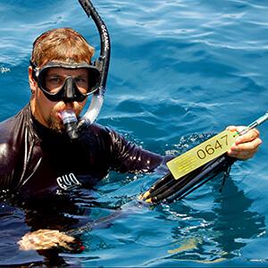 matt-potenski-shark-adventure.jpg