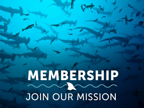 join-shark-research-institute.jpg