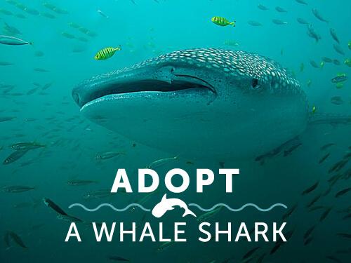join-shark-research-institute.jpg
