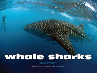 whale-sharks-by-david-rowat.jpg