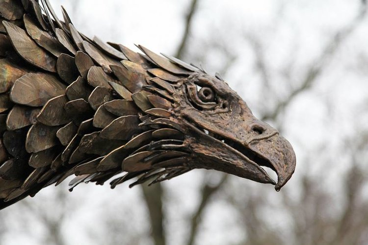 Eagle+Head.jpg